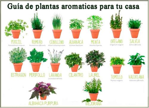 Plantas Aromaticas Romero Albahaca Oregano Tomillo Menta Etc