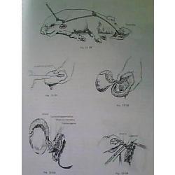 Libro Terapéutica Quirúrgica, F. Valdés Villareal.
