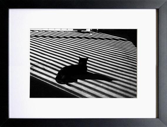 Fotografia Fin Art Black Cat&gate 30cm Nº 22/24 S/moldura