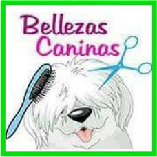 Peluquería Canina A Domicilio Y En Local Todos Los Cortes