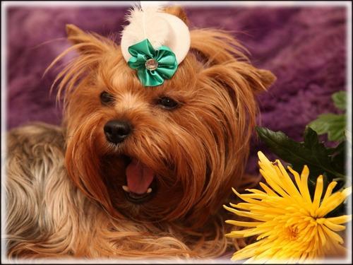 Decoração Pet Veterinária Foto Cães Animais 65x90cm Dog #26