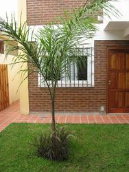 Sol De Verano Departamento San Bernardo - Alquiler