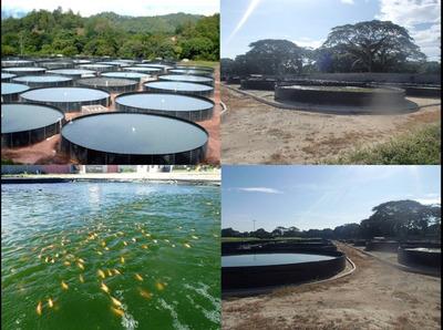 Tanques Acuícolas Geomembrana Lagunas Cultivos Acuicultura