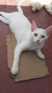 Lindos Gatitos En Adopción!
