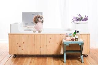 Maquina Bubble Spa, Para Pet E Para Família