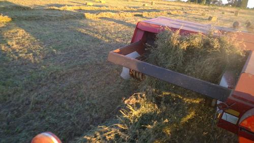 Fardos De Alfalfa Cuadrados
