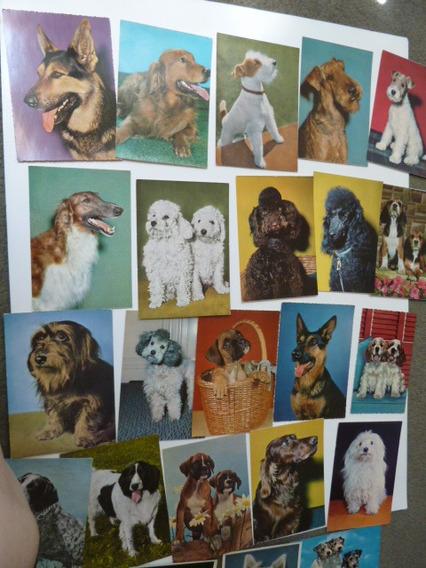 4 Tarjetas Postales Perros , Alemanas, Vintage
