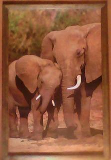 Cuadro Grande Nuevo Elefantes