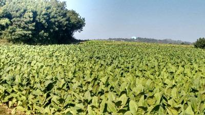 Coalicion Vende 1850 Tarea En Mao 100% Agricola