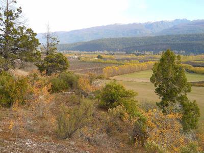 Camino De Los Nogales