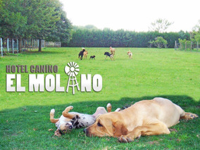 Guarderia Canina El Molino