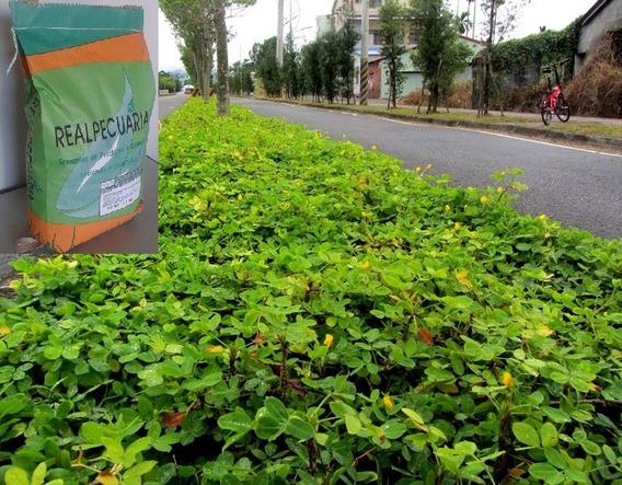 1 Kg De Sementes De Grama Amendoim (sementes Selecionadas)