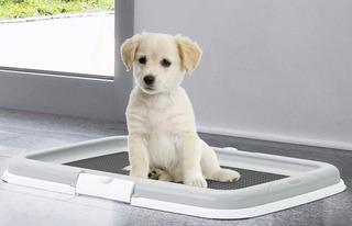 Bandeja Plastica Baño Para Cachorros, 60 X 40 Cms