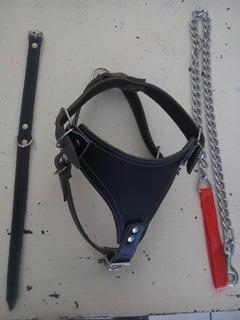 Pechera T 5, Collar 65cm Y Cadena 4.mm Para Perro Grande