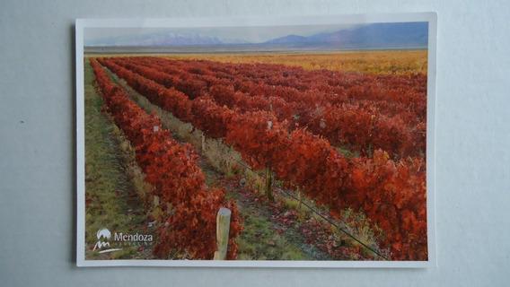 Tarjeta Postal Viñas Cordillera Caminos De Vino 2007 Mendoza