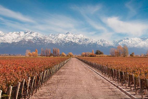 Viñedo Premium En Valle De Uco, La Consulta. Mendoza