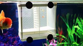 Incubadora Criadeira Incubadora Alevinos Peixes Aquário