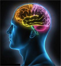 Electroencefalograma Eeg A Domicilio Mapeos Polisomnografias