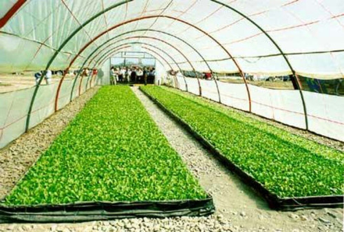 Nylon Grueso Filtro Uv Ideal Invernaderos  Usos  Agricola M2
