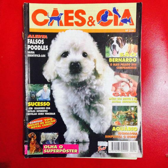 Cães E Cia - Falsos Poodles Cuidado