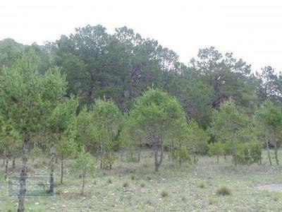 Terreno En Venta, Arteaga, Coahuila