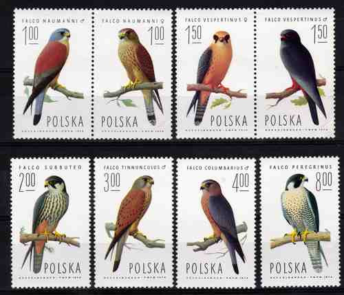 8 Estampillas De Polonia Tema Pajaros Halcones Año 1974
