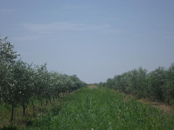 Finca Agricola/ganadera De 100hs Excelente Tierra