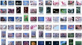 Coleção De Imagens E Vetores De Alta Resolução - 06 Dvds