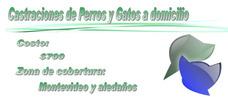 Castraciones De Perros Y Gatos A Domicilio 097401518