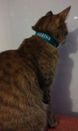 Collar Para Gatos Bordado Personalizado Pet Id