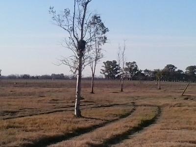 Campo En Mercedes De 6 Hs Para Caballos O Vacas 2 Km Ruta 41