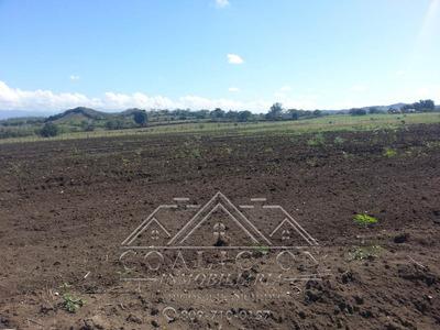 Coalicion Vende 53 Tarea Agrícola En Guayacanes