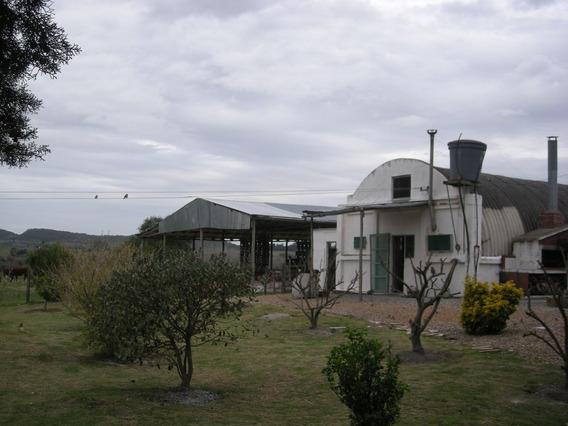 Completito Establecimiento Ganadero, En Muy Bonita Zona.