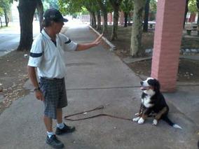 Entrenador Egresado Del Kennel Club Cap Y Provincia