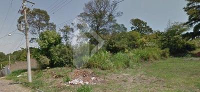 Terreno - Cidade Nova - Ref: 185517 - V-185517