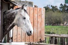 Pensionado Para Equinos En Box O A Campo