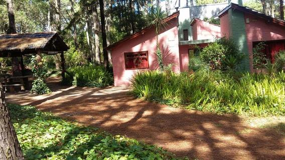 Alquiler De Casa En El Bosque De Mar De Las Pampas