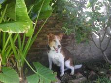 Guarderia Canina La Carola Zona Moron, Ambiente Climatizado