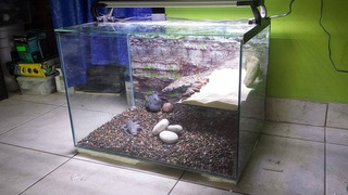 Acuaterrarios Para Tortugas 70l