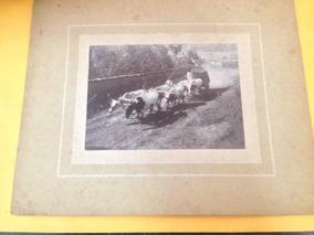 Foto Antiga Carro De Boi