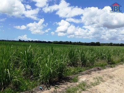 Fazendas À Venda Em Marechal Deodoro/al - Compre O Seu Fazendas Aqui! - 1404563