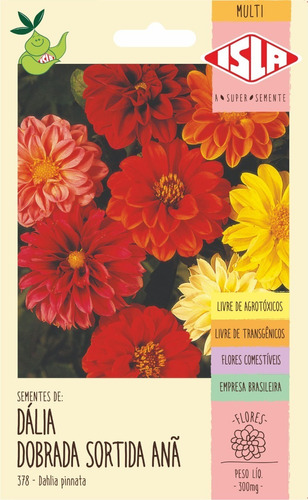 Sementes De Dália Dobrada Sortida Anã Flor