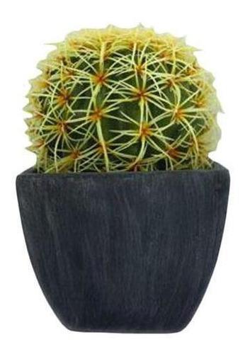 Planta Cactus Ball En Maceta De Terracota
