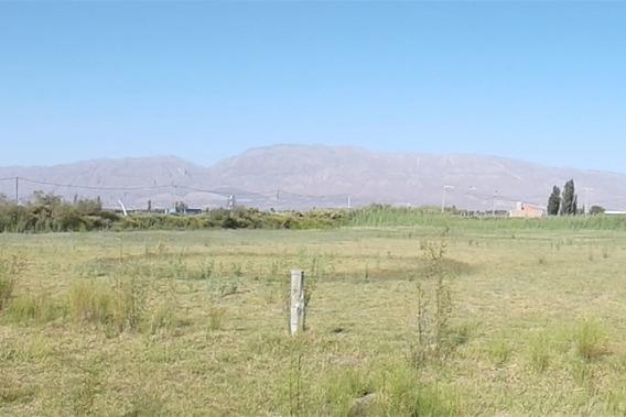 Venta Terreno 3500 M2 Zona Quintas,el Medanito