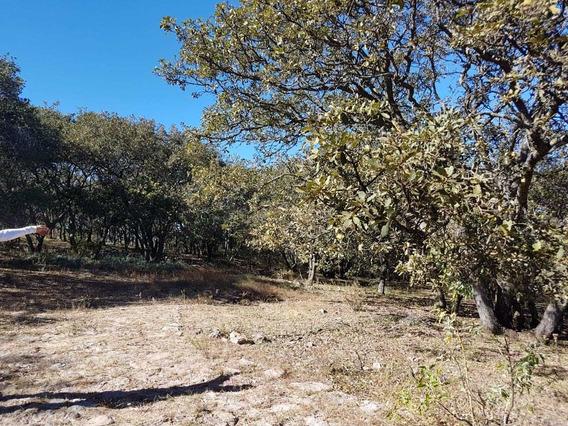 Oportunidad! Terreno En Sierra De Lobos