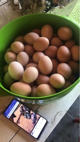 Vendo Ovos Caipira E Ovos De Pata