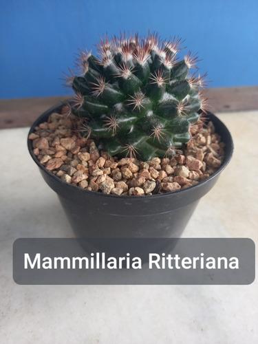 Mudas De Cactos Cactus Com Vaso Promocional