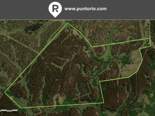 Punto Río | 83 Hectáreas Forestadas