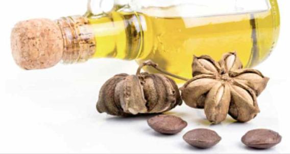 Aceite De Sacha Inchi Al Granel! Por Litros 100% Ecuadorian