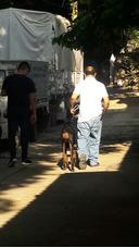 Clases De Adiestramiento Canino Personalizado